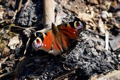 Butterfly sitting on debris stock photos