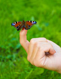Butterfly sitting on finger Royalty Free Stock Photography