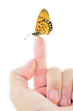Butterfly sitting on finger Royalty Free Stock Image