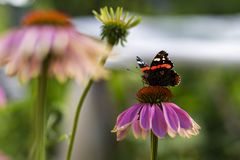 Butterfly sitting on a flower. The butterfly sitting on a flower royalty free stock photo