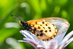 Butterfly sitting on a flower Royalty Free Stock Image