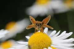 Butterfly. A butterfly sitting on a flower Stock Photography