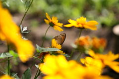 A butterfly. Sitting on a flower Stock Images