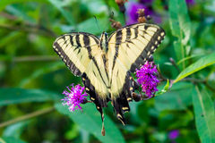 Butterfly sitting on a flower.  stock photo