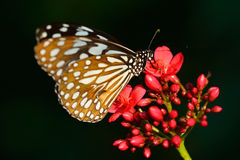Butterfly sitting in the flower Royalty Free Stock Image