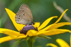 Butterfly sitting on a flower, closeup stock photography