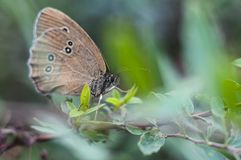 Butterfly sitting on a flower, closeup royalty free stock photography