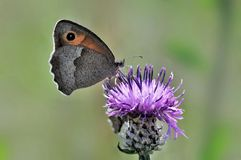 Butterfly sitting on a flower, closeup stock images