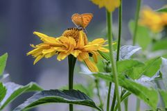 Butterfly sitting on a flower, closeup royalty free stock images
