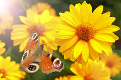 Butterfly sitting on a flower Stock Images
