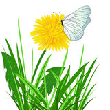 Butterfly sitting on a flower Stock Photos