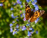 Butterfly sitting on a flower. Drinking nectar royalty free stock photos