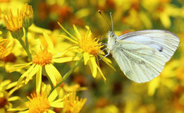 The butterfly Stock Photography