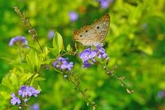 Butterfly sitting on flower in garden. Butterfly sitting on purple flower in garden surrounded by green environment stock photos