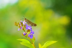 Butterfly sitting on flower in garden. Butterfly sitting on purple flower in garden surrounded by green environment royalty free stock photo
