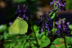 Butterfly sitting on a flower. Butterfly sitting on a lilac flower stock images