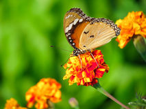 Butterfly sitting on flower Stock Photos