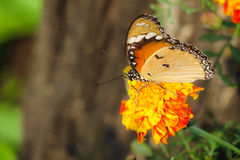 Butterfly sitting on flower Stock Photography