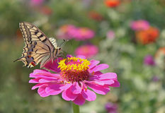 Butterfly sitting on flower Stock Image