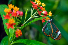 Butterfly sitting on a flower in spring Stock Photography
