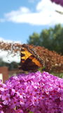Butterfly sitting on flower. Stock Photography