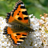 Butterfly sitting on a flower in spring. Time Royalty Free Stock Photos