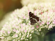 Butterfly sitting on flowers in the garden. Butterfly sitting on small flowers in the garden royalty free stock photos