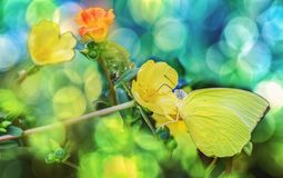 Butterfly sitting on flowers to take nectar,honey. Butterfly sitting on flowers to take nector,honey royalty free stock images