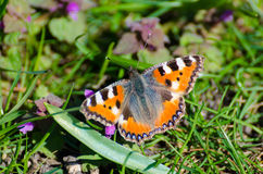 Butterfly. Sitting in the garden Royalty Free Stock Photos