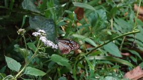 Butterfly sitting on the grass stock video