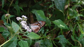 Butterfly sitting on the grass stock footage