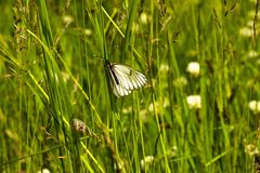 Butterfly sitting on the grass in a meadow. Royalty Free Stock Photos