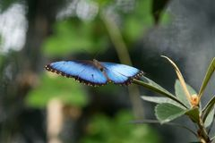 Butterfly sitting on green branches. In the greenhouse royalty free stock photos