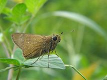 Butterfly is sitting on a green leaf royalty free stock photo