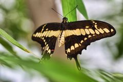 Butterfly sitting on green leaf. Colorful butterfly sitting on green leaf royalty free stock photo