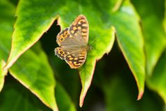 Butterfly sitting on the green leave. Beautiful butterfly. Insect in the natural habitat royalty free stock photo