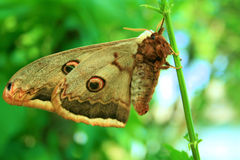 Butterfly. Sitting on a green stalk clear day Royalty Free Stock Photography