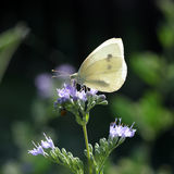 Butterfly sitting on a grey twig Royalty Free Stock Images