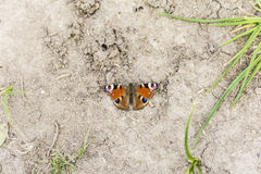 Butterfly sitting on the ground Royalty Free Stock Photography