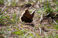 Butterfly sitting on the ground in the sun. A beautiful butterfly sitting in grass on the ground in the sun royalty free stock photo