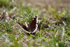 Butterfly sitting on the ground in the sun. A beautiful butterfly sitting in grass on the ground in the sun stock photo