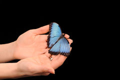 Butterfly sitting on the hand Royalty Free Stock Images