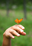 Butterfly sitting on hand Stock Photo