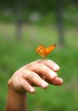 Butterfly sitting on hand. Butterfly sitting on the man hand stock photo