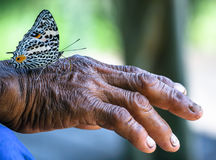 Butterfly sitting on Hand of old man stock photo