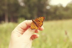 Butterfly sitting on hand on summer nature backround. Bright butterfly sitting on hand on summer nature backround stock photo