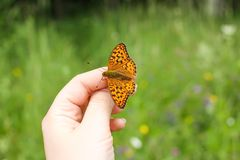 Butterfly sitting on hand on summer nature backround. Bright butterfly sitting on hand on summer nature backround royalty free stock photography