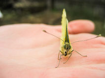 Butterfly. Sitting on the human hand Royalty Free Stock Photos