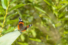 Butterfly sitting on the leaf against a blurred background of greens Royalty Free Stock Image