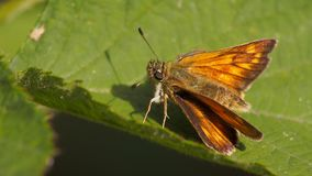 Butterfly sitting on a leaf. In the garden stock photography